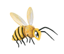 bee illustration from children's book Love Rays